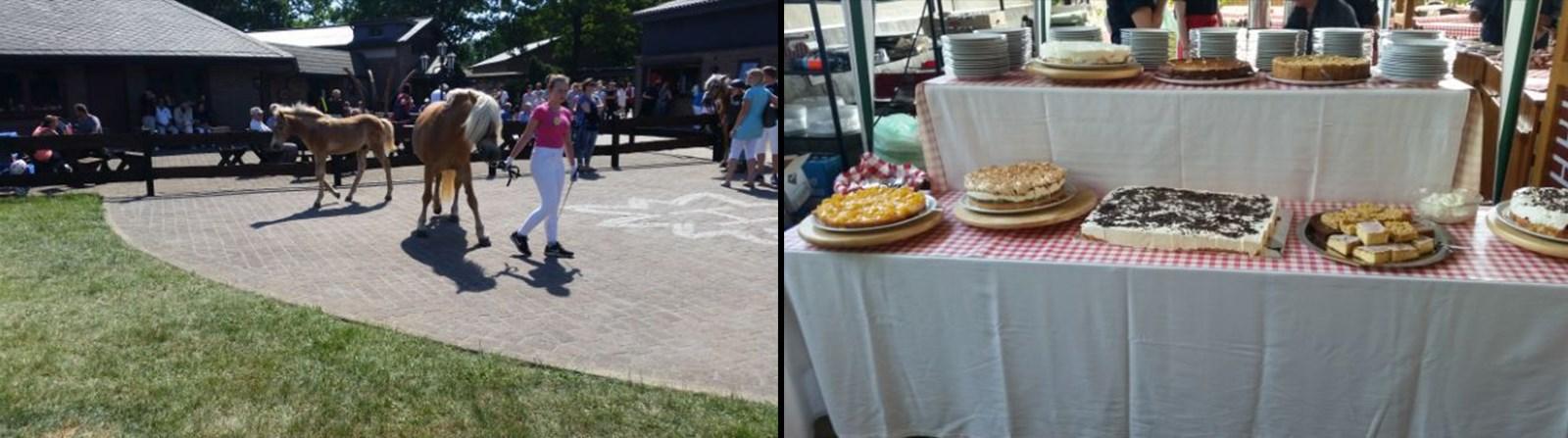 Links: Die obligatorische Fohlenshow / rechts: die leckeren Torten und Kuchen